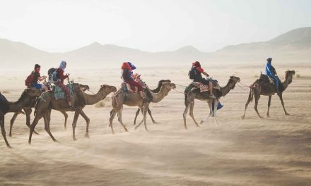 Camels Still Ideal for Crossing Desert Terrain