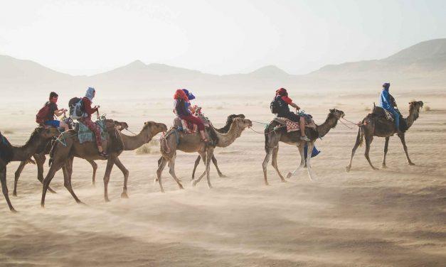 Camels Still Ideal for Crossing Desert Terrain