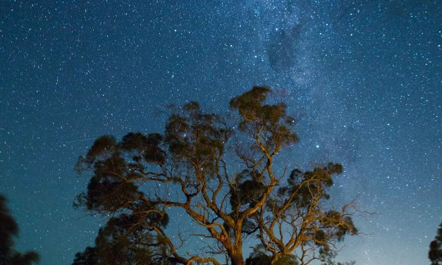 The Oldest Trees on Earth and the Stories They Tell